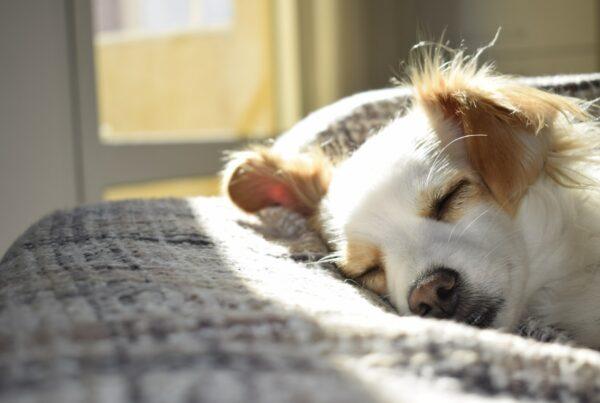 CBD olie honden en dieren